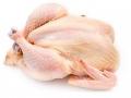 pollo1.jpg